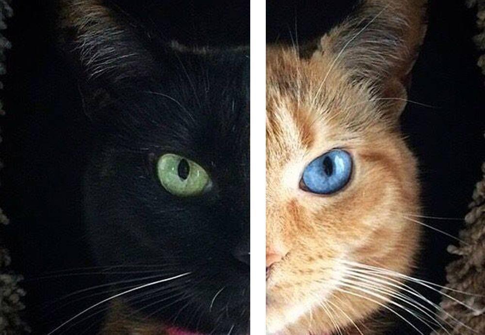 gato dos caras destacada