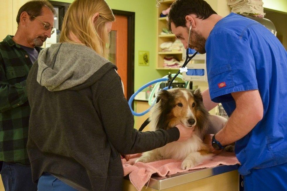 DoveLewis Emegency Animal Hospital