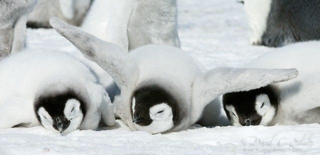 pinguinos-libertad-01