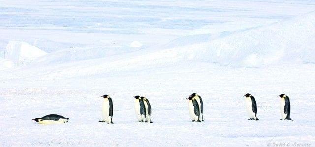 pinguinos-libertad-02