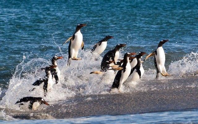 pinguinos-libertad-03