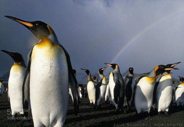 pinguinos-libertad-04