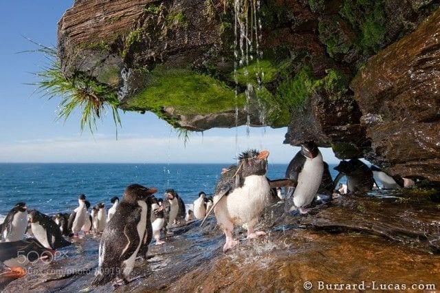 pinguinos-libertad-05