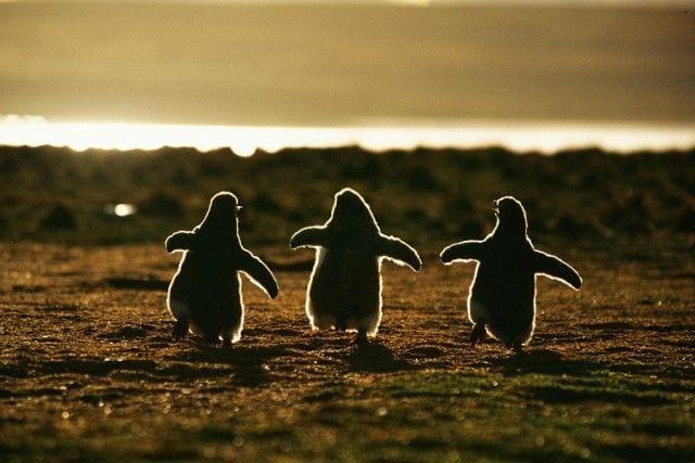 pinguinos-libertad-06