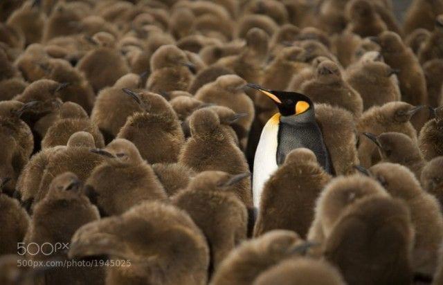 pinguinos-libertad-07