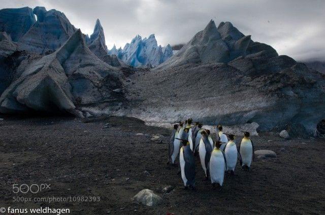 pinguinos-libertad-08