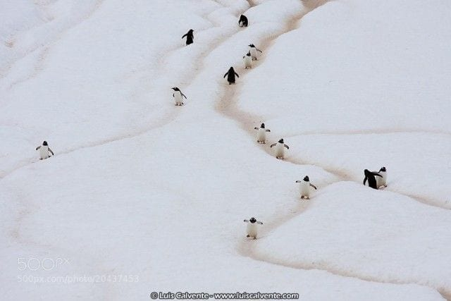 pinguinos-libertad-09