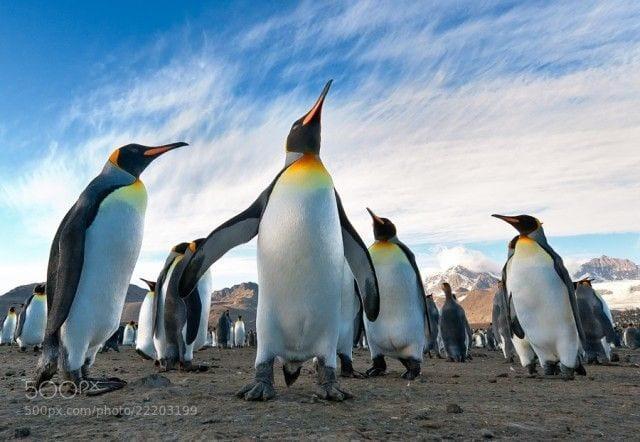 pinguinos-libertad-10