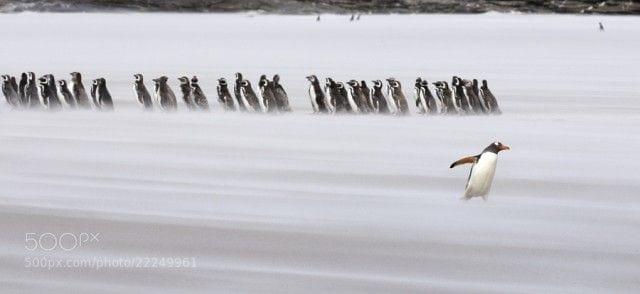 pinguinos-libertad-11