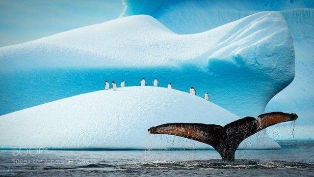 pinguinos-libertad-14
