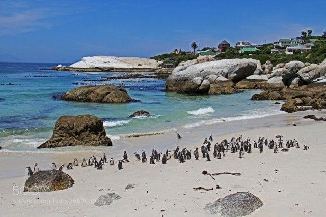 pinguinos-libertad-15