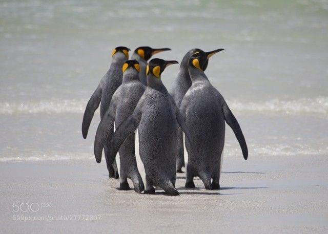pinguinos-libertad-16