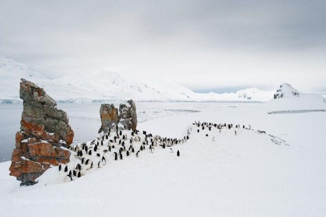 pinguinos-libertad-18