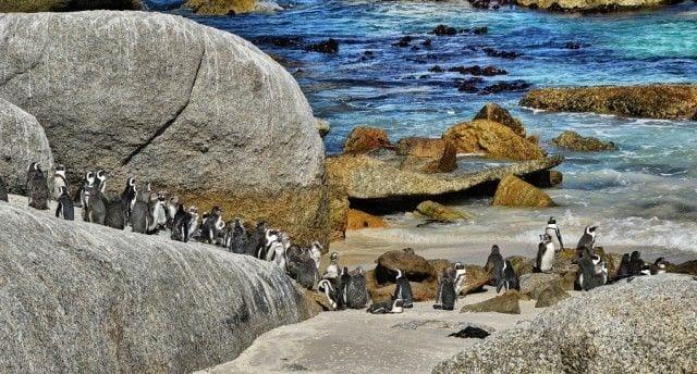 pinguinos-libertad-19