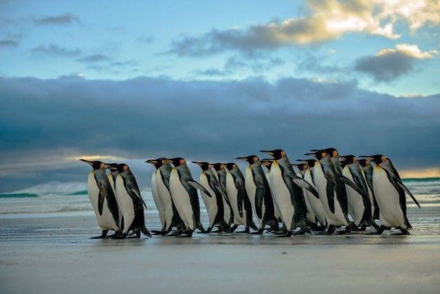 pinguinos-libertad-20