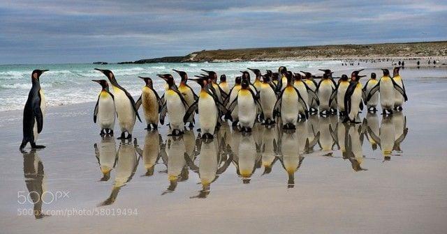 pinguinos-libertad-21