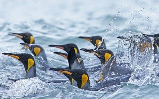 pinguinos-libertad-22
