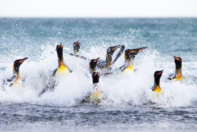 pinguinos libertad 24