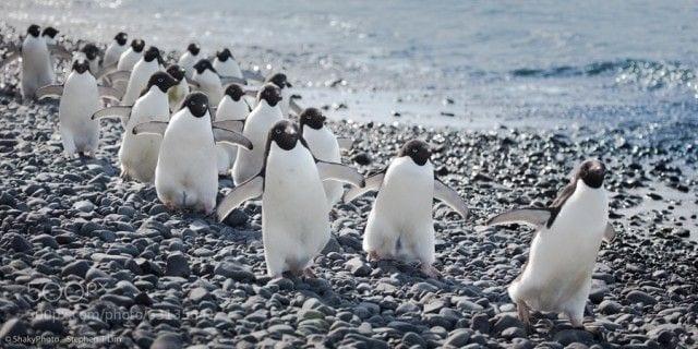 pinguinos-libertad-25