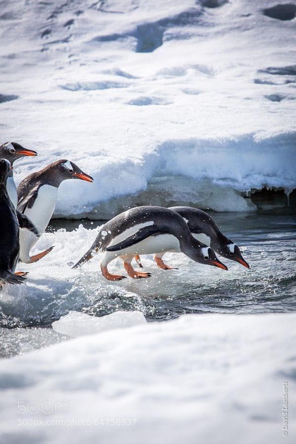 pinguinos-libertad-26