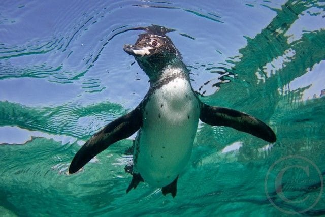 pinguinos-libertad-27