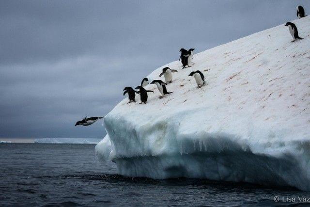 pinguinos-libertad-28