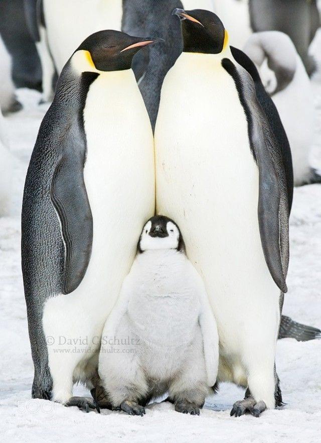 pinguinos-libertad-30