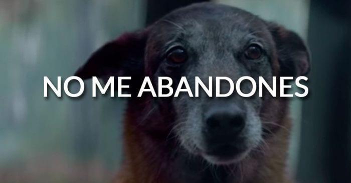 abandono francia perros