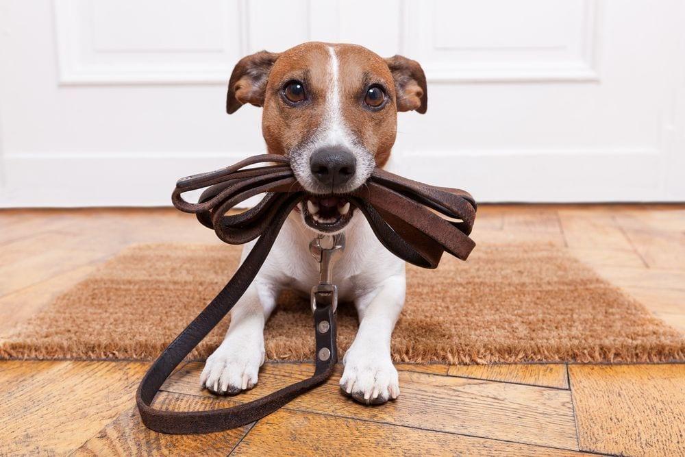 adoptar-perro1