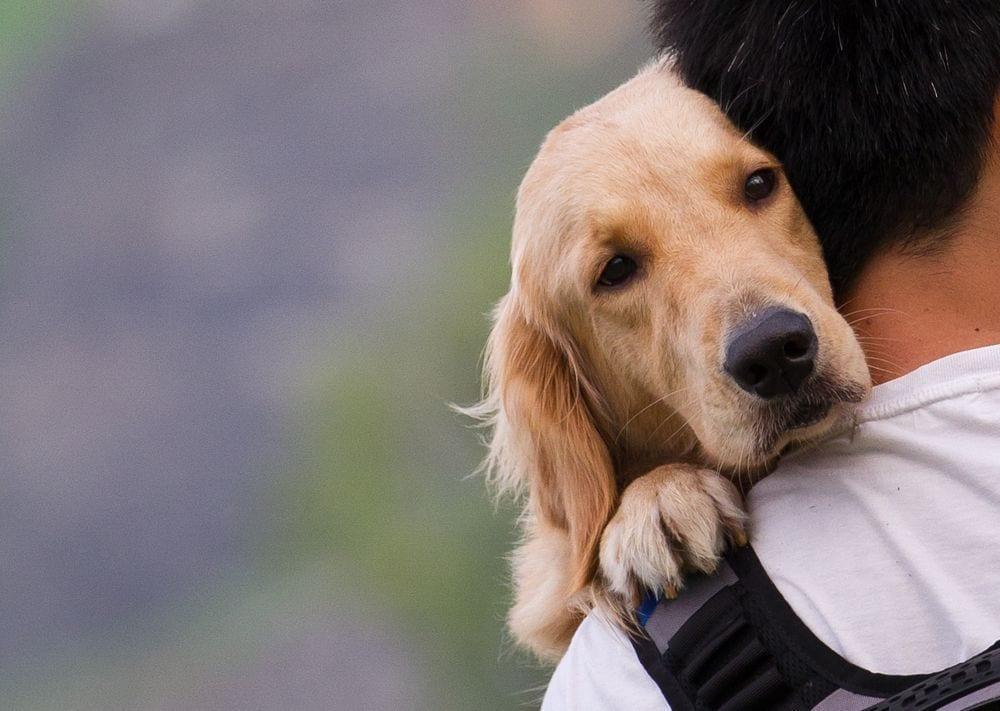 adoptar-perro2