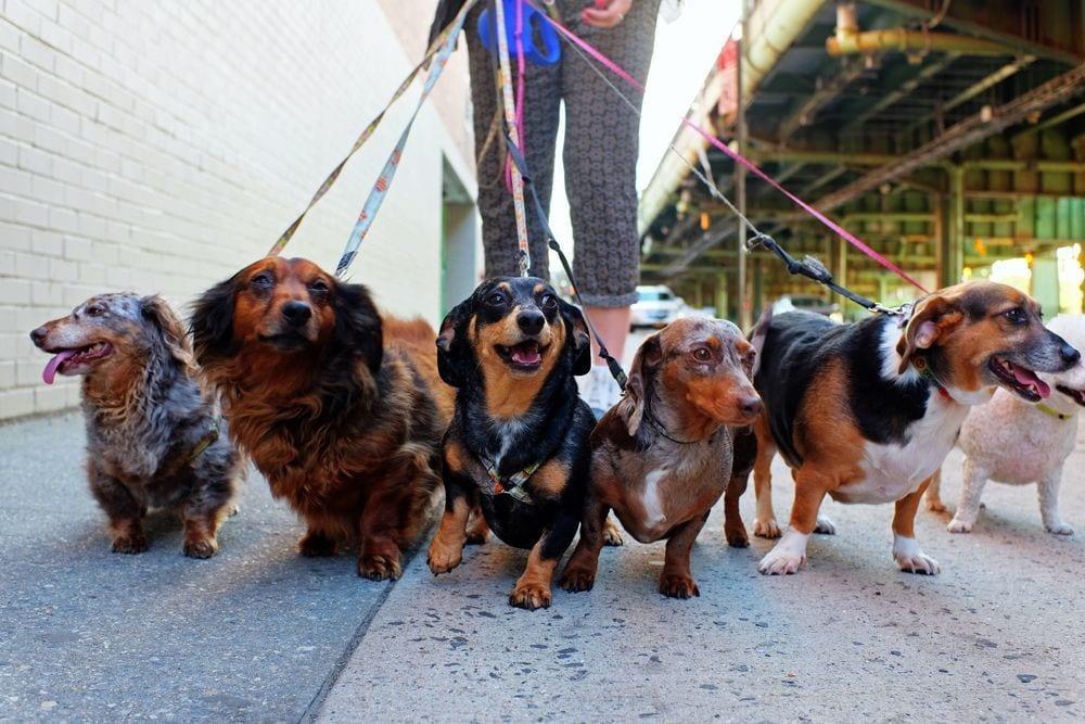 adoptar-perro3