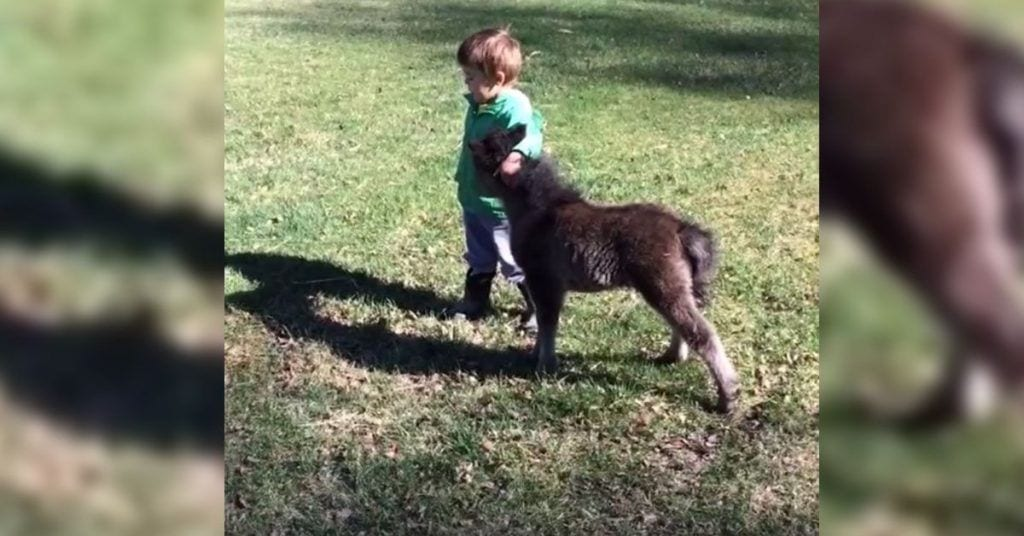 amigo burro