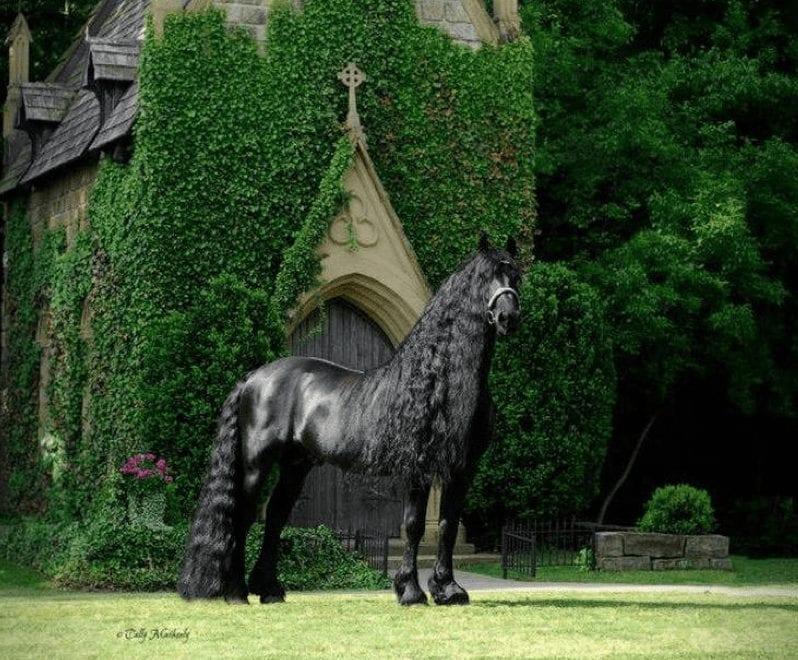 Federico el hermoso, el caballo más bonito del mundo