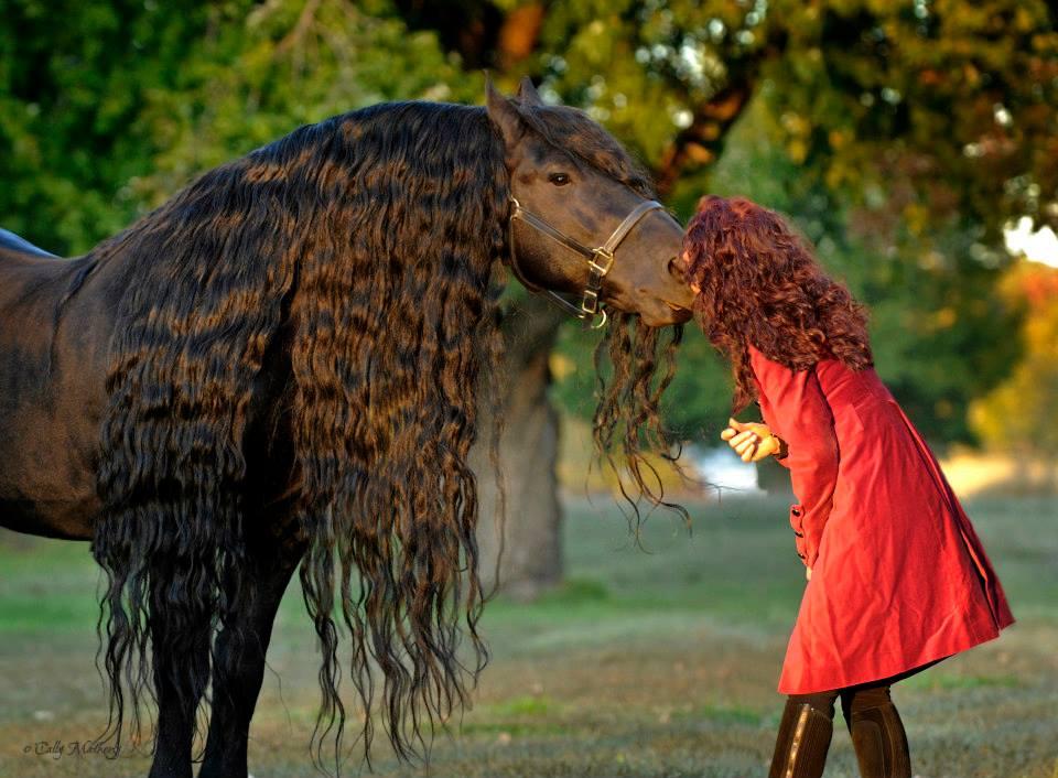 La melena de estos caballos luce larga y brillante