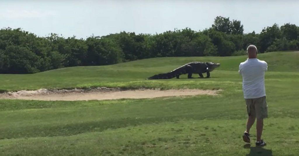 caiman-gigante-golf-01