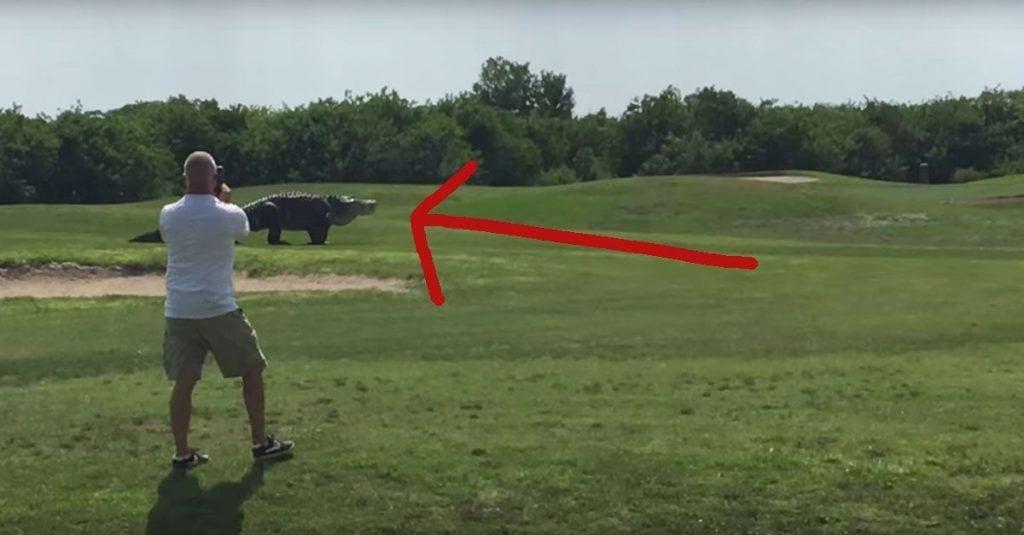 caiman gigante golf