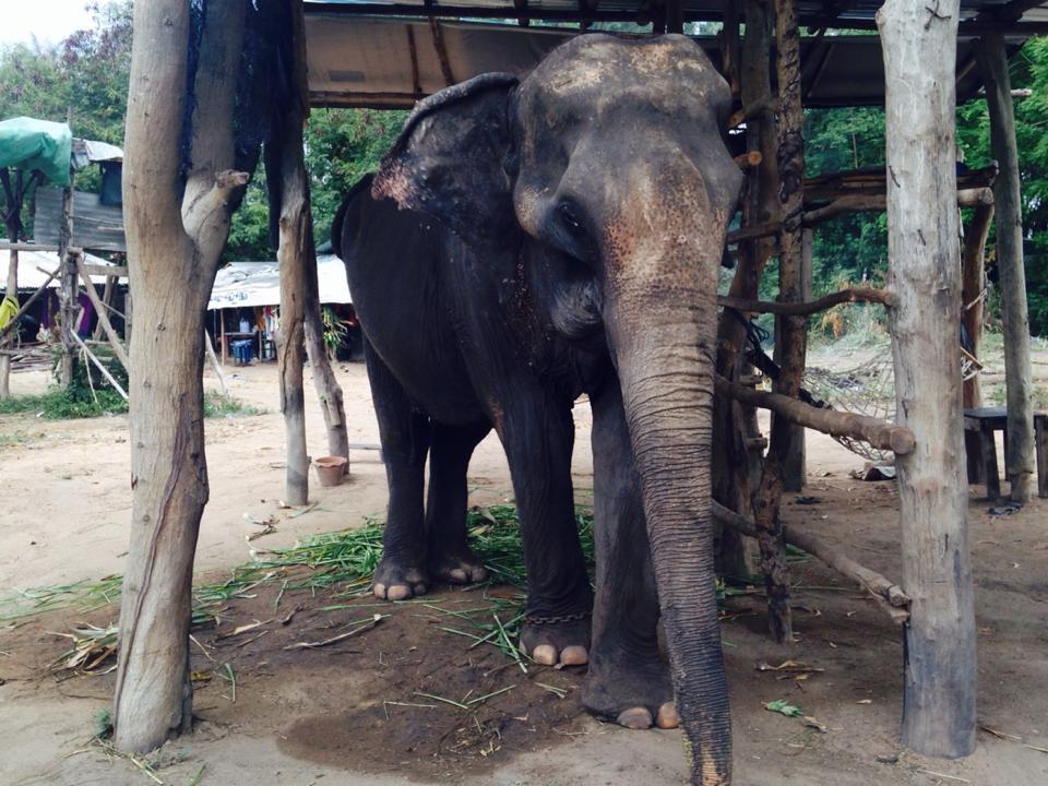 elefante_rescatado