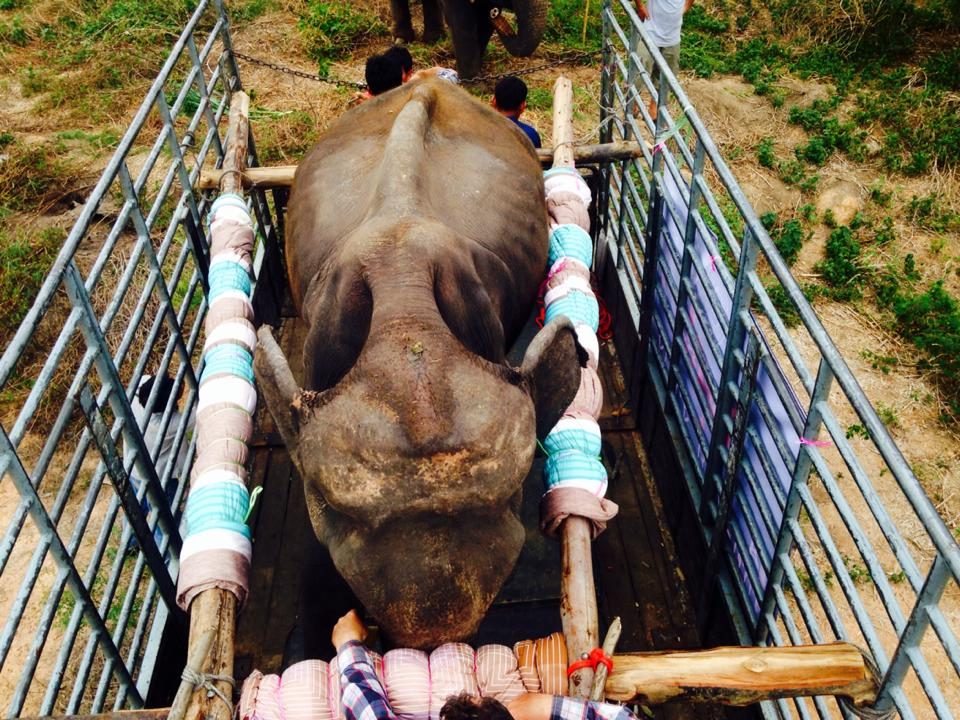 elefante rescatado2