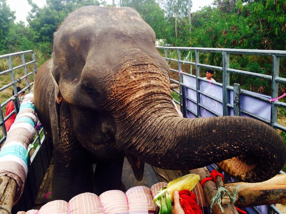 elefante_rescatado3