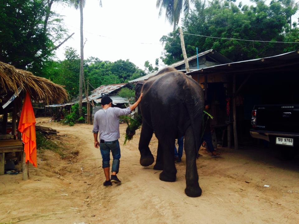 elefante_rescatado8