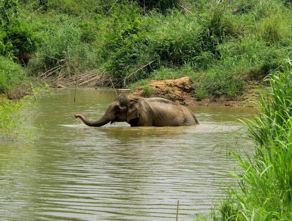 elefante_rescatados4