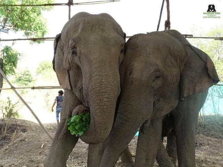 elefantes circo 06
