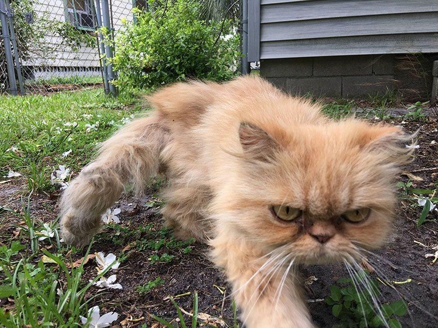 gato-enfadado1