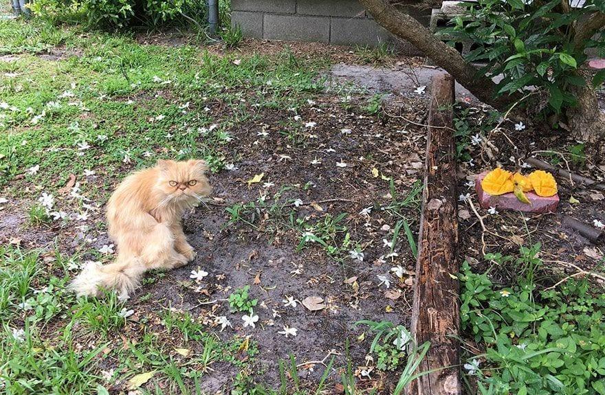 gato-enfadado3