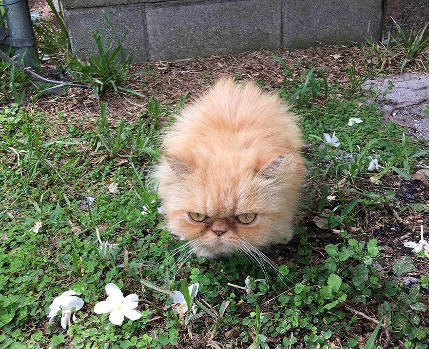 gato-enfadado4
