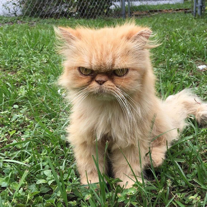 gato-enfadado6