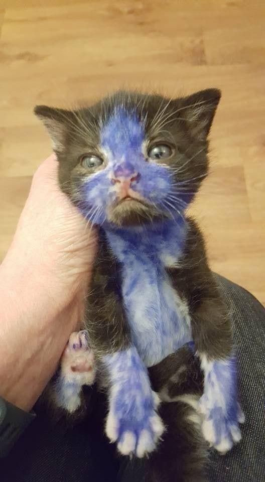 gatos-pintados2