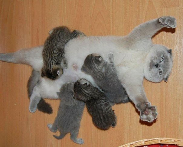 maternidad-animal11