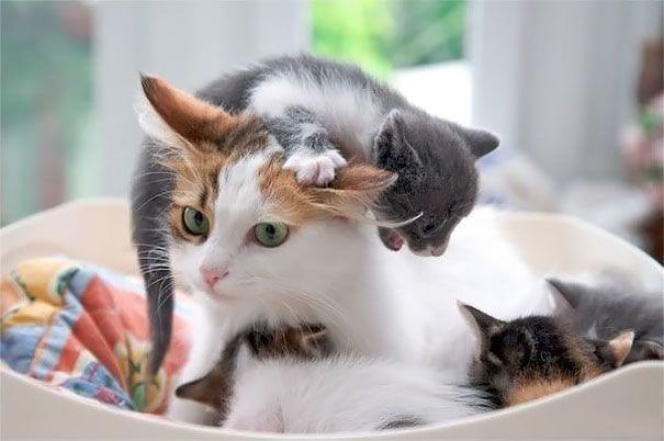 maternidad-animal2