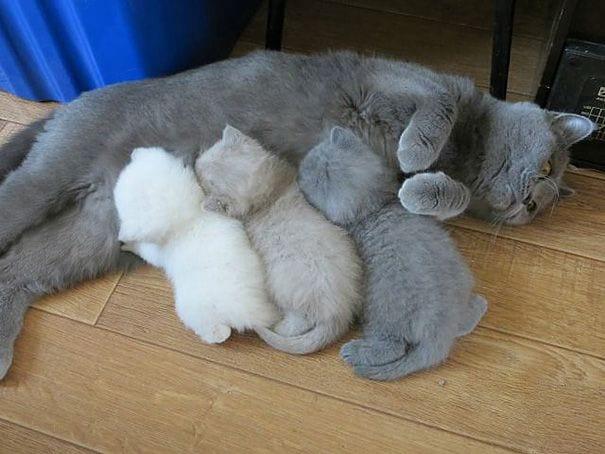 maternidad-animal5